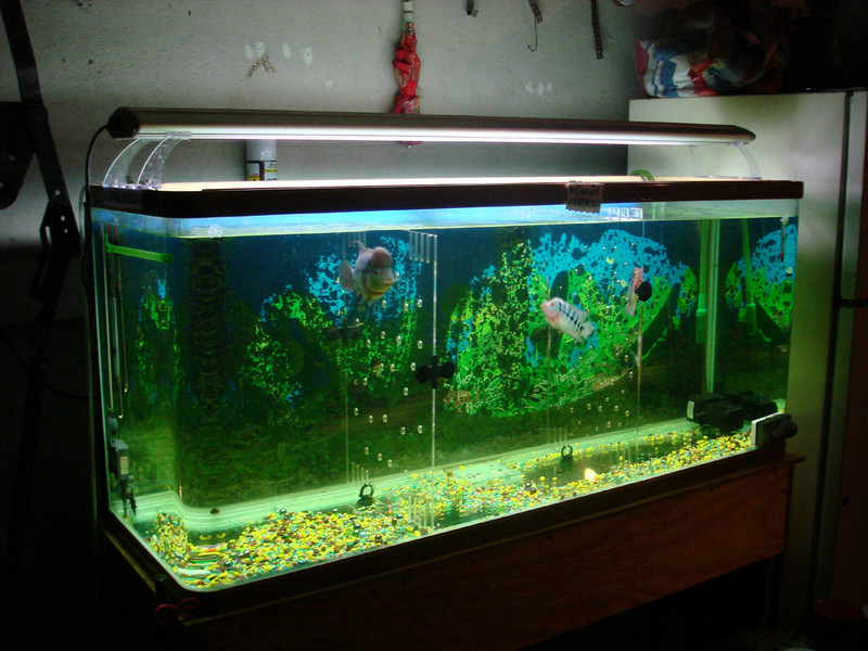 Tanks display from members of fhrus for How to keep fish tank clean without changing water